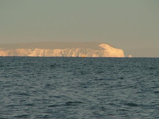 The Rosscourt: Spot the Polar Bear