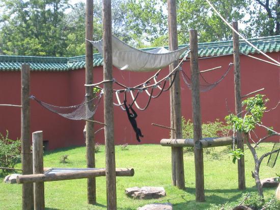 Memphis Zoo: just a swinging