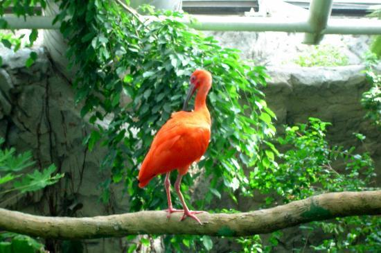 National Aquarium, Baltimore: Big orange bird