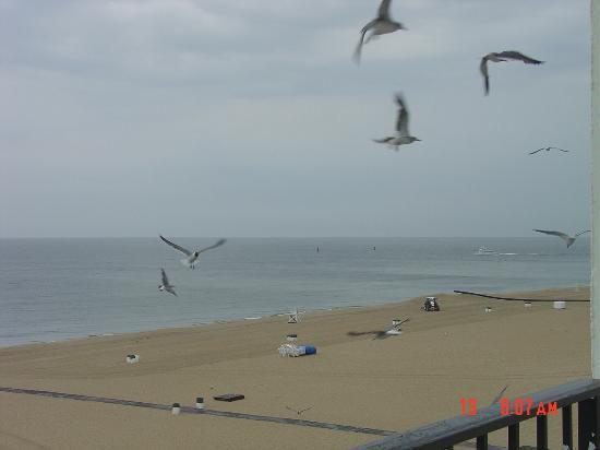 ذا باركلي تاورز ريزورت هوتل: morning seagulls saying hello