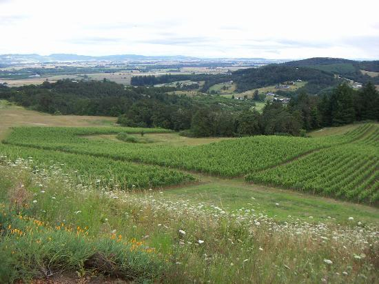 Youngberg Hill Vineyards & Inn: Youngberg vineyards and beyond