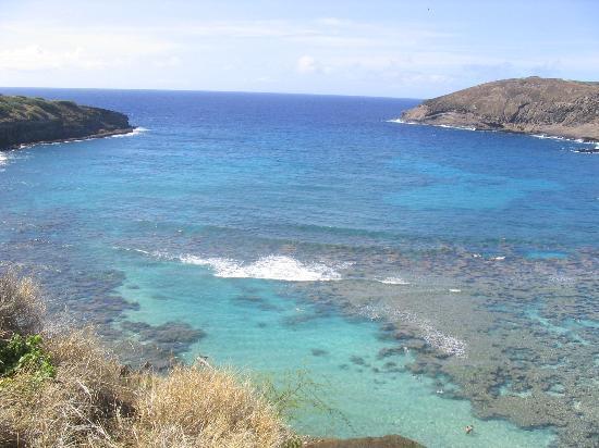Hanauma Bay Nature Preserve: reef baby yeh!