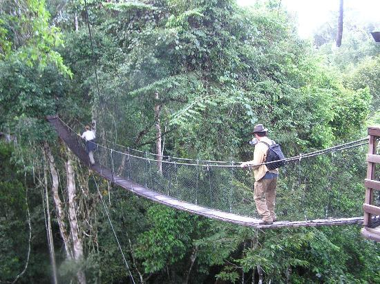 Inkaterra Ecological Reserve : More scary than it looks