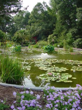 New Hanover County Arboretum: Pond