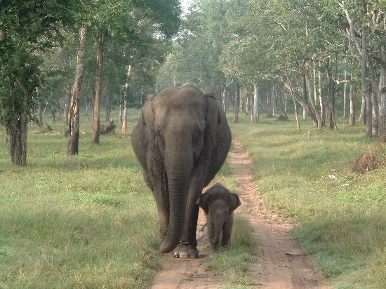 Kabini River Lodge : in the Elephant Camp