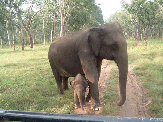 Kabini River Lodge: Safest Place For a Baby Elephant