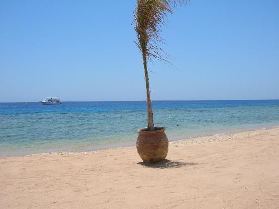 Hyatt Regency Sharm El Sheikh Resort: The view from my sunbed on the beach
