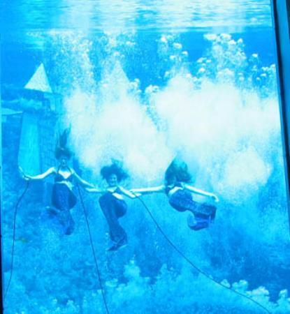 Weeki Wachee Springs: Weeki Wachee Mermaid Show