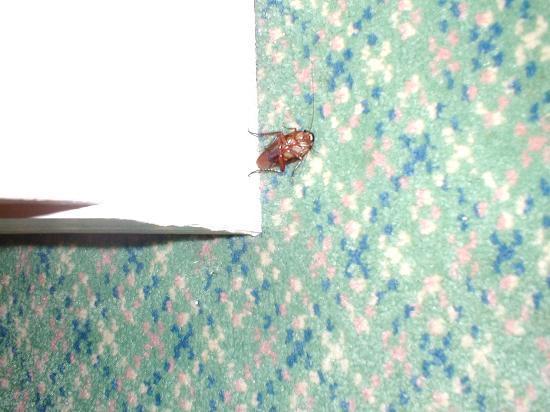 Sheraton Vistana Resort - Lake Buena Vista : bug problem