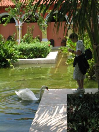 Iberostar Paraiso Beach: Swans in lobby area