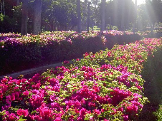 Beautiful flowers everywhere on the Kamaole Sands grounds