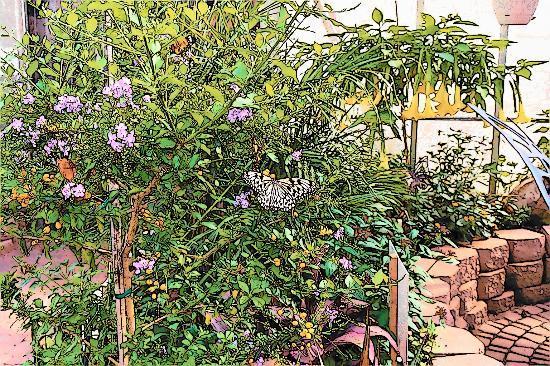 The Original Mackinac Island Butterfly House & Insect World : Stunning butterflies!
