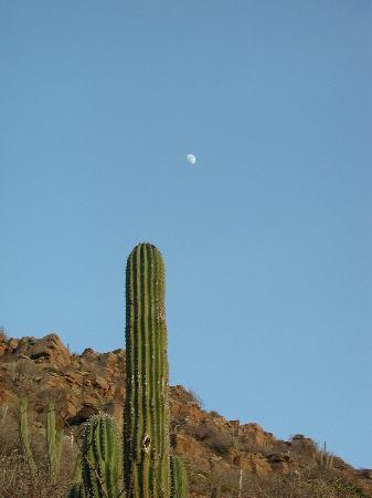 Las Palmas Casitas: Desert Moon