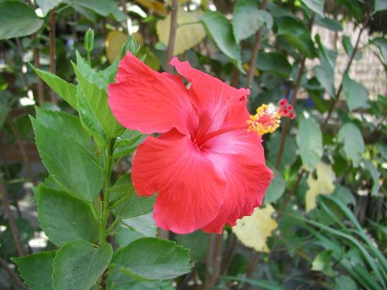 Las Palmas Casitas : In Bloom