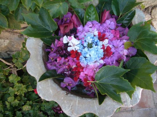 Hotel Villa Ducale: flowers