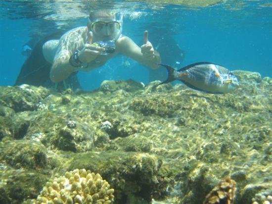 Hyatt Regency Sharm El Sheikh Resort: snorkeling
