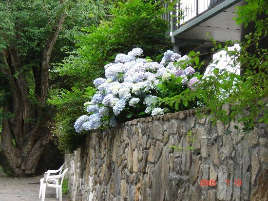 Riverside Motel: A hydrangea bush growing outside of the motel