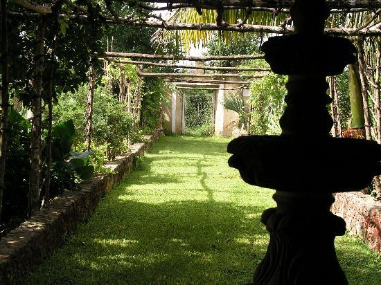 Hacienda San Pedro Nohpat: Garden @ breakfast