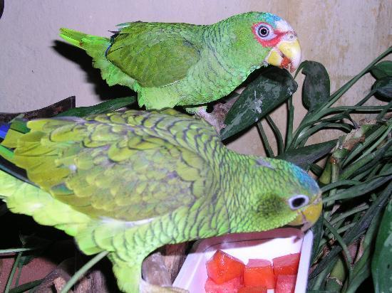 Hacienda San Pedro Nohpat: parrots