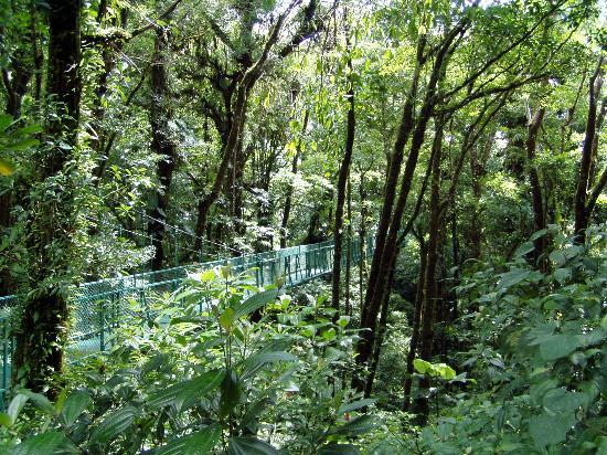 Ecolodge San Luis : Don't pass up the canopy tours!