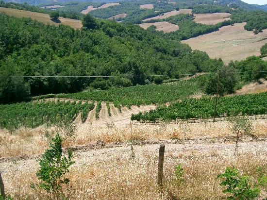 Agriturismo Erta : The vineyard