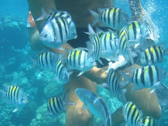 Paradisus Rio de Oro Resort & Spa: Fish Soup!