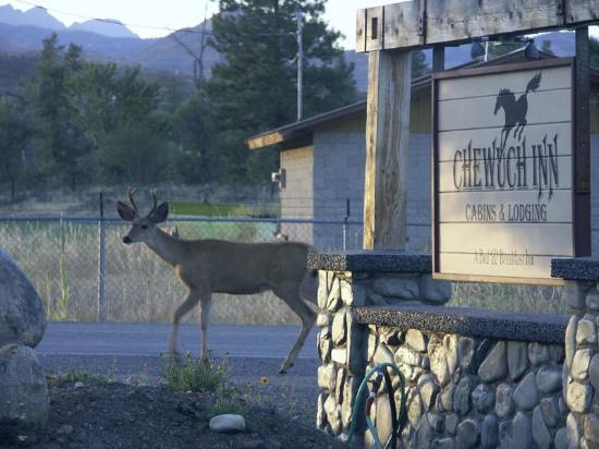 Chewuch Inn & Cabins: Mule Deer at twilight at the Inn