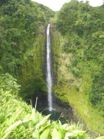 Akaka Falls State Park : Akaka Falls