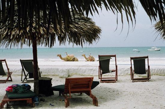 Pinewood Beach Resort & Spa: The beach at Pinewood