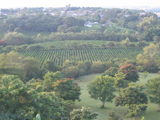 Finca Rosa Blanca Coffee Plantation & Inn: Coffee Plantation on Premesis