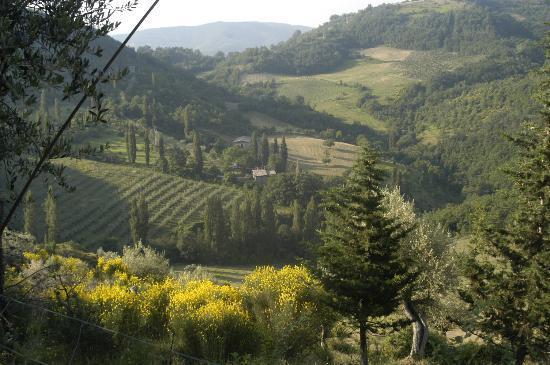 Le Silve di Armenzano di Assisi Photo