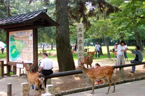 Nara, Japan: Deer looking for handouts by the park entrance