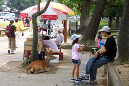 Nara, Japan: Deer hover by the street vendor who sells snacks
