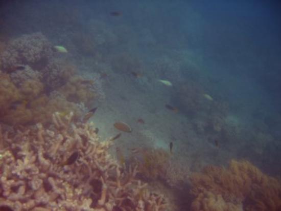 Порт-Дуглас, Австралия: Coral