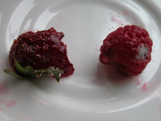 Muskoka District, Canadá: Bad : moldy fruits in the Lake Joseph dining room during breakfast.  This ruined the rest of...