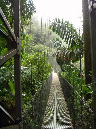Lost Iguana Resort & Spa: Hanging Bridges