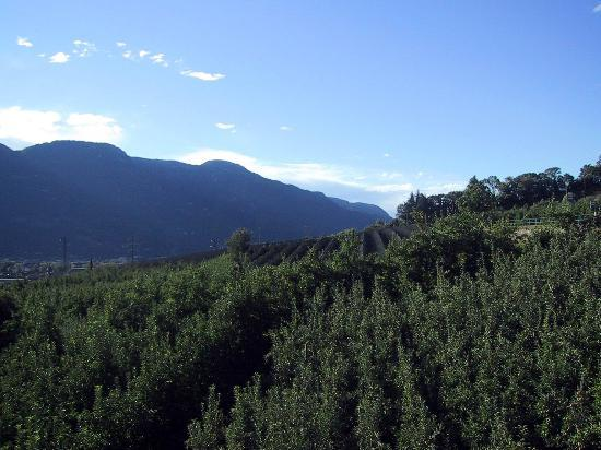 Hotel Residenz Pazeider: Apple orchard from Terrace