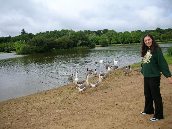 L'Arc en Ciel : There is a nearby lake with geese and a path...