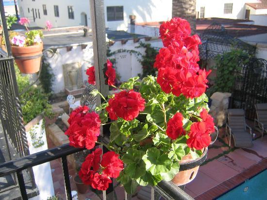 Villa Rosa Inn: Flowers on balcony...