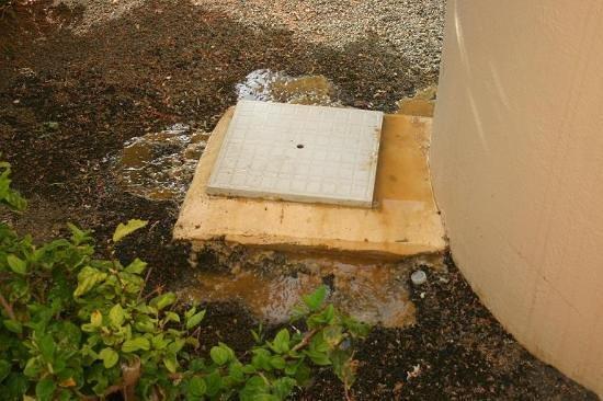 Jardin Canario: Bubbling over