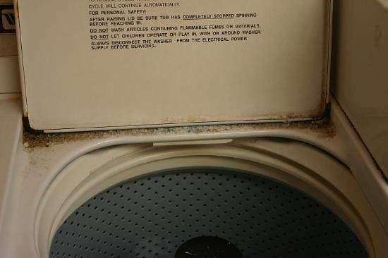Jardin Canario: Wash your clothes here