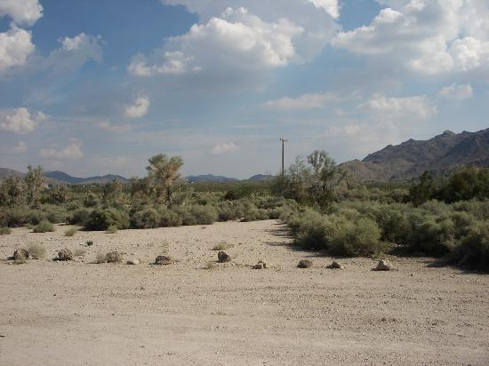 29 Palms Inn: View of Mojave desert from Encelia