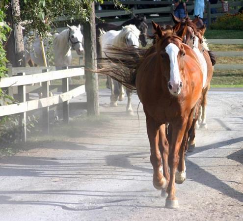 Rocking Horse Ranch Resort: Horses Walking to the Paddock in the Evening
