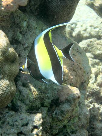 Lily Beach Resort & Spa: Banner Fish