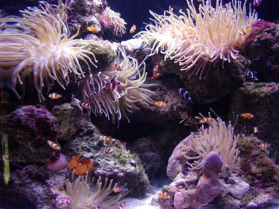 "Atlantis - Harborside Resort: Little ""Nemos"" at The Dig"