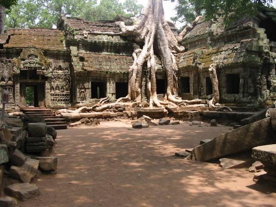 Monoreach Angkor Hotel: Ta Prohm Temple