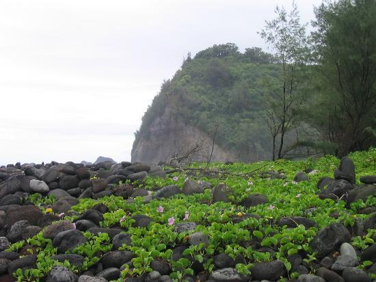 Island of Hawaii, HI: Pretty ground cover