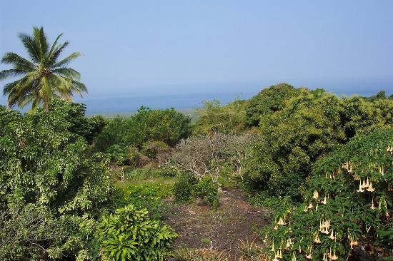 A Place of Refuge B&B: View from the Lanai