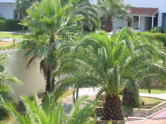 Aristoteles Beach Hotel: Palm tree in the hotel's park