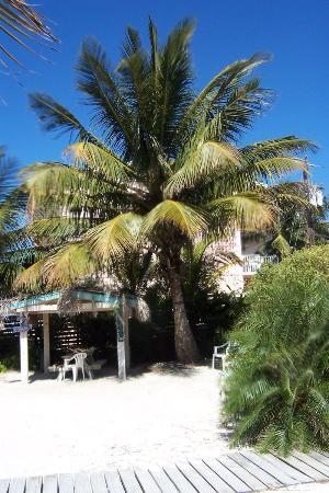 Island Bay Resort: tiki hut and coconut tree